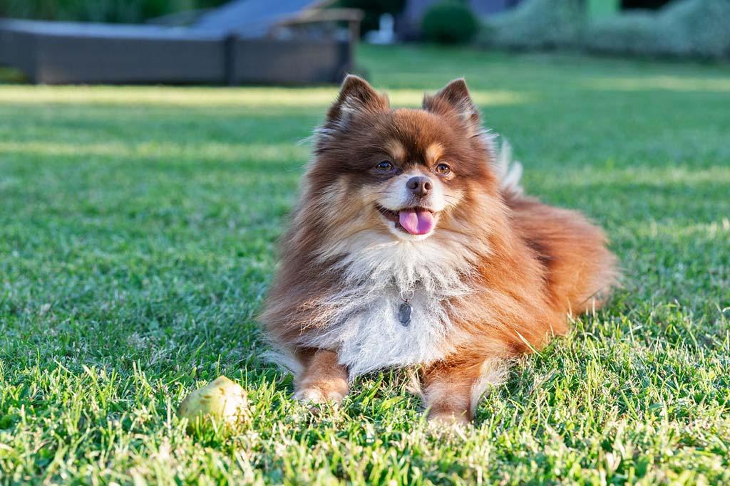 Mounty, der Hotelhund